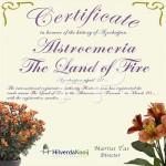Certificaat Tijgerlelie Alstroemeria The land of Fire Hilverda Kooij