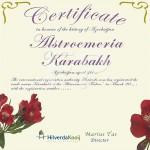 Certificaat Tijgerlelie Alstroemeria Karabakh Hilverda Kooij
