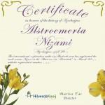 Certificaat Tijgerlelie Alstroemeria Nizami Hilverda Kooij
