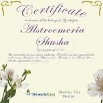 Certificaat Tijgerlelie Alstroemeria Shusha Hilverda Kooij
