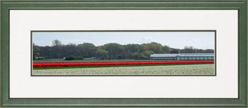 Houten panorama lijst met bloeiende rode tulpen veld en kassen in de bollenstreek