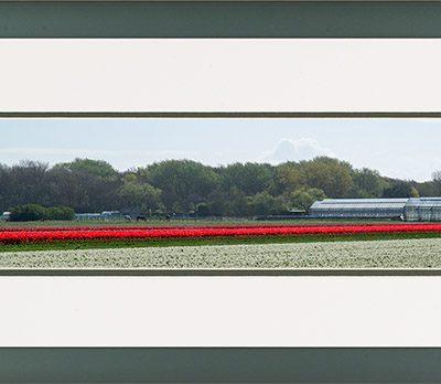 Aluminium panorama lijst met bloeiende rode tulpen veld en kassen in de bollenstreek