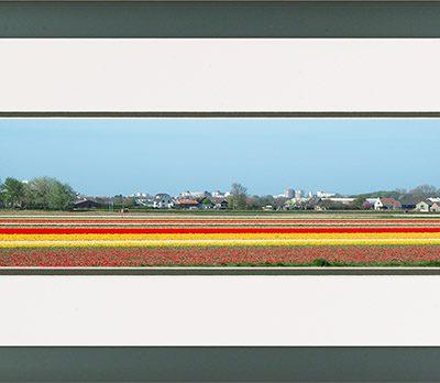 Aluminium lijst, Panorama afbeelding van een bloeiend tulpen veld, geel en rood