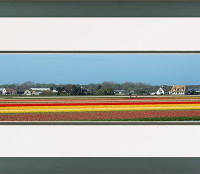 Aluminium lijst, Panorama afbeelding van een bloeiend tulpen veld, in geel en rood