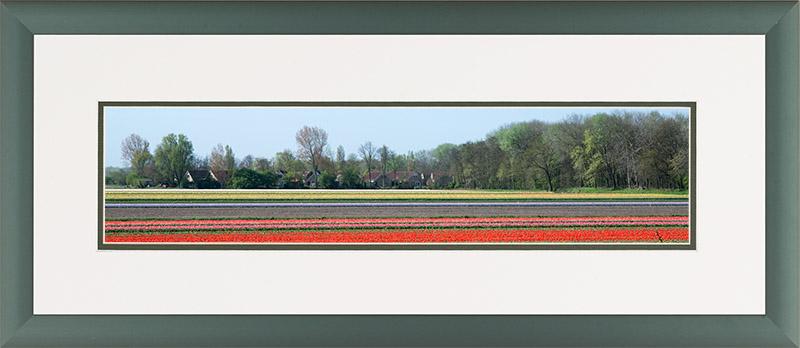 Aluminium lijst, panorama afbeelding van een bloeiend tulpen veld, rood en roze
