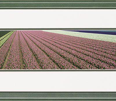 Houten panorama lijst met een bloeiende krokus veld in de bollenstreek.