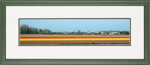 Houten lijst, Panorama afbeelding van een bloeiend tulpen veld, geel en rood, in de bollenstreek.