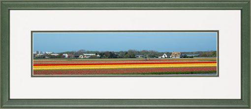 Houten lijst, Panorama afbeelding van een bloeiend tulpen veld, in geel en rood