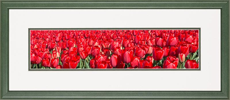 Houten lijst, detail bloeiende rode tulpen in het veld