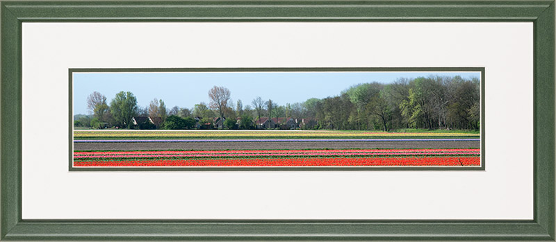 Houten lijst, panorama afbeelding van een bloeiend tulpen veld, rood en roze