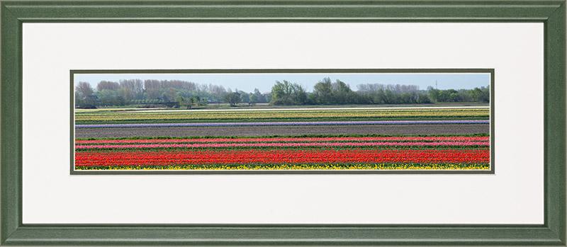 Houten lijst, panorama afbeelding van een bloeiend tulpen veld, rood en roze en violet, in de bollenstreek.
