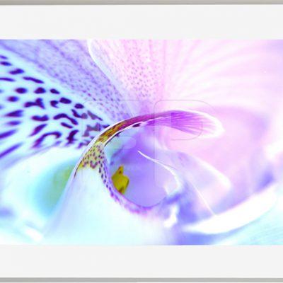 Botanische motieven Tender Tango Swirl