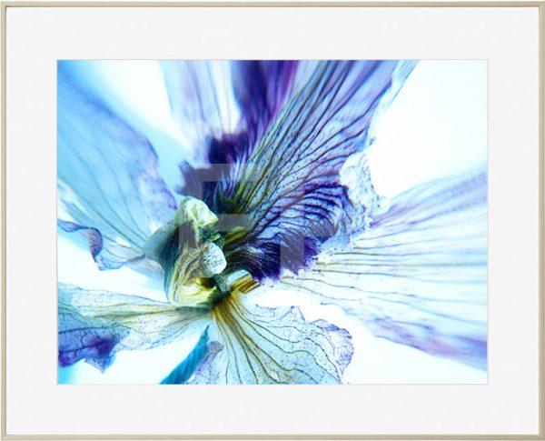 Alumium houtkleurige lijst met detail van een bloem in diverse tinten blauw en paarsblauw, Tender Decay Old Things passed