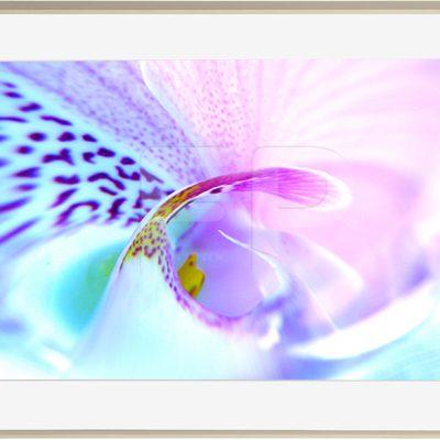 Botanische motieven, houtkleurige lijst, Tender Tango Swirl