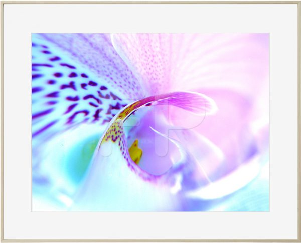 Aluminium houtkleurige lijst met detail van een bloem in paars en roze en lichtblauw, Tender Tango Swirl
