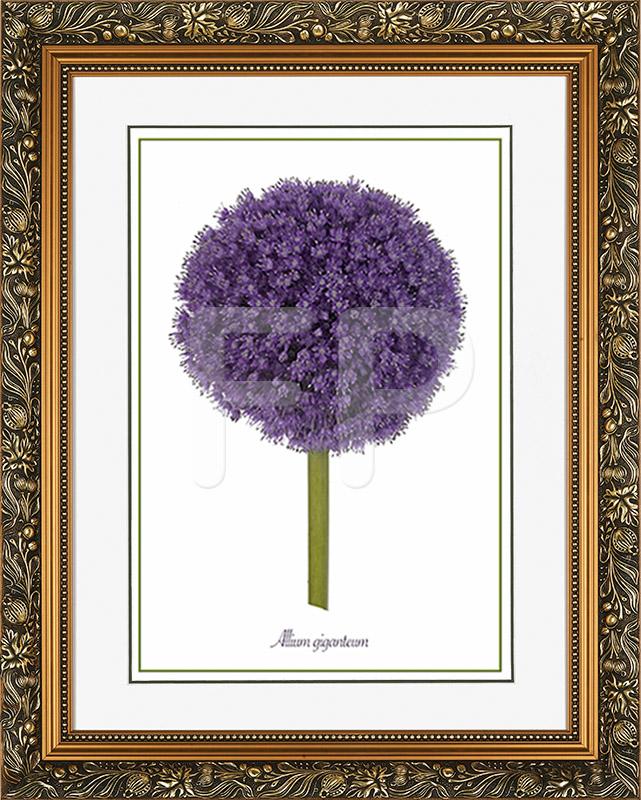 Brede, goudkleurige lijst met florale motieven en een afbeelding van een bloeiende Ui, Allium giganteum