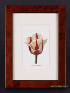 Tulipa Flaming Bird, wortelnoten lijst, 9 x 13 cm