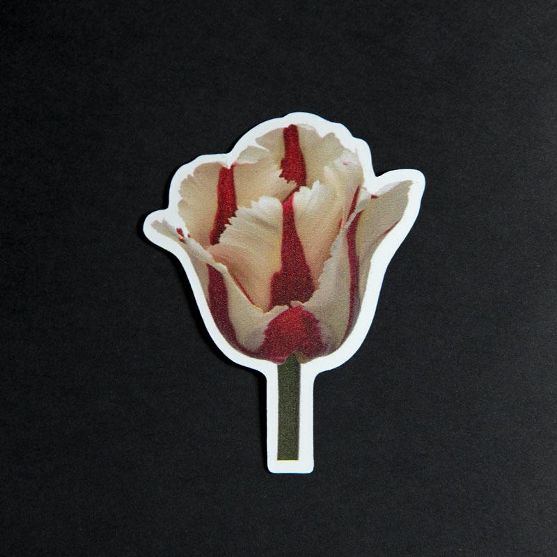 Een flexibele magneet met een botanische afbeelding van de Tulp Flaming Bird