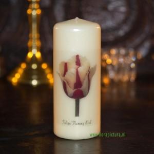 Kaars tulp