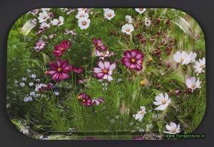 Dienblad veldbloemen